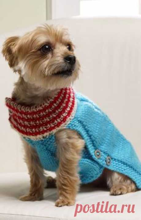 Knit a Holiday Sweater for a Little Dog – Knitting
