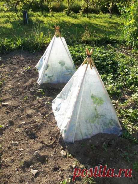 Парник для огурцов: крутые идеи, способные обеспечить ранний урожай — Дай урожай