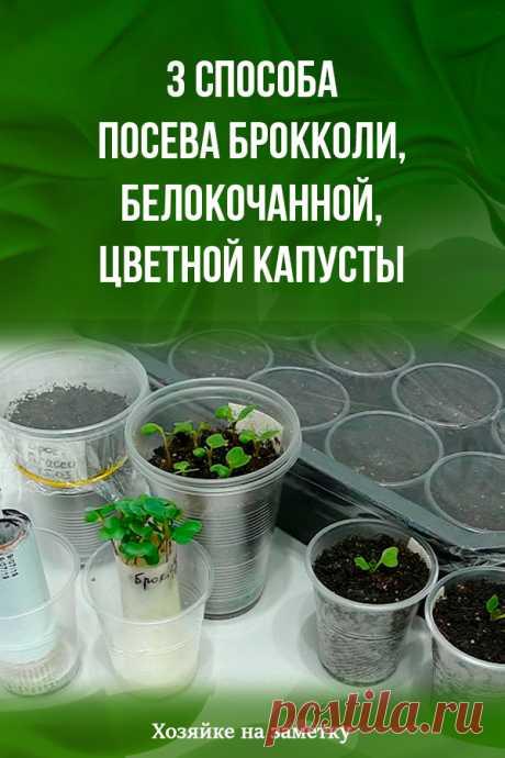 3 способа посева брокколи, белокочанной, цветной капусты