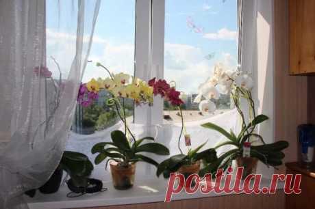 Почему нельзя держать орхидею в спальне?