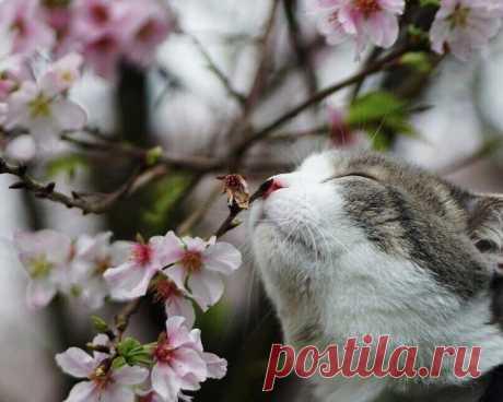 La primavera sobre la nariz