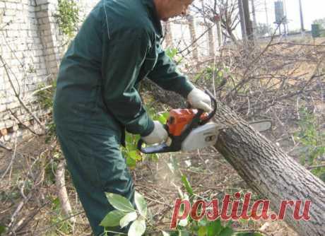 «Спилил - в тюрьму»: что может ждать дачника за срубленное дерево на участке - Дачный участок - медиаплатформа МирТесен