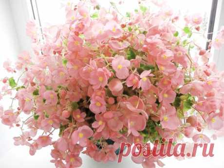 Как подкармливать комнатные растения в разные периоды