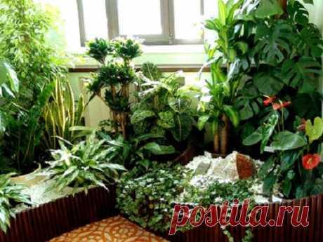 Лунный календарь комнатных растений на 2016 год