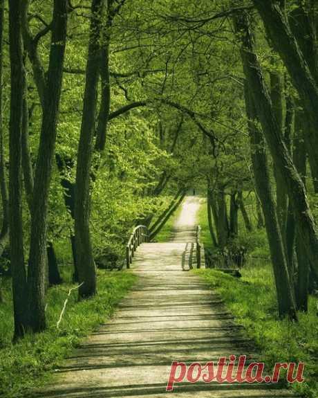 Зелёная зелень зеленеет на фоне зеленеющей зелени. Дания