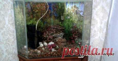 Запуск аквариума   Быково-медиа