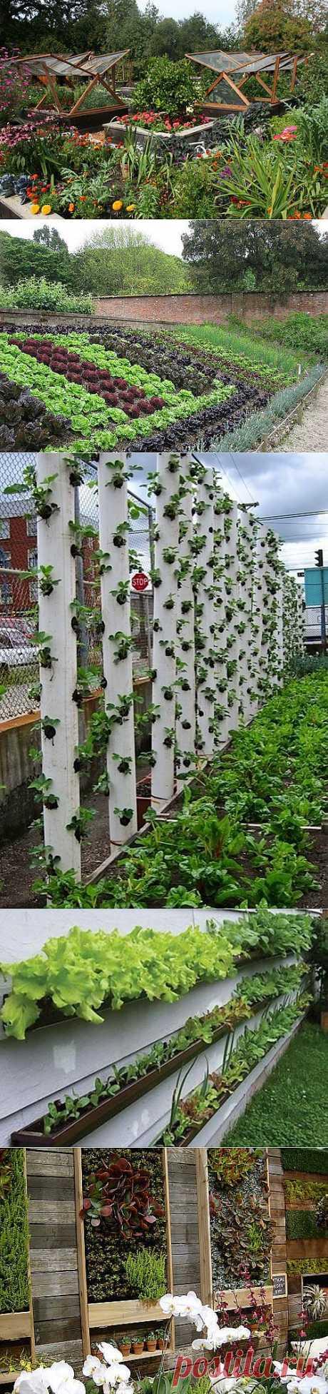Декоративный огород: как сделать красивые грядки на участке   Наш уютный дом
