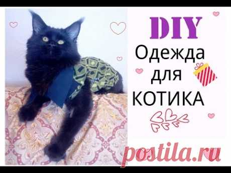 DIY:ШЬЕМ ОДЕЖДУ ДЛЯ КОТА.SEW CLOTHES FOR CAT.