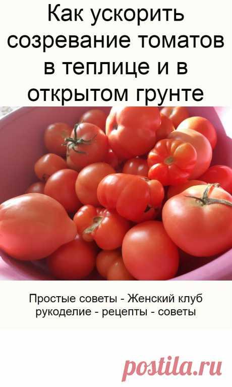 Как ускорить созревание томатов в теплице и в открытом грунте