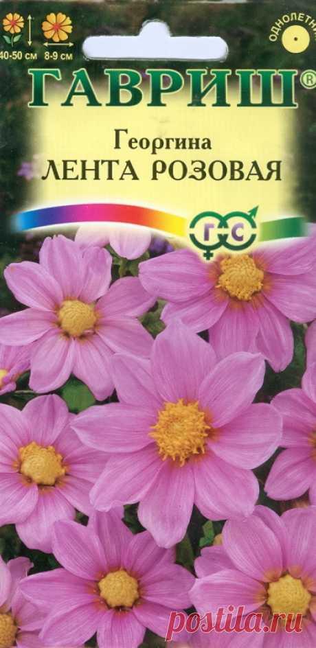 """Георгина """"Лента розовая"""""""