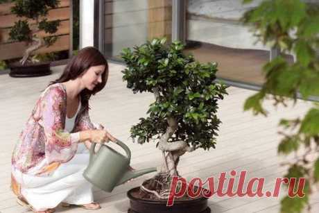 As in room conditions to grow up a small tree a bonsai