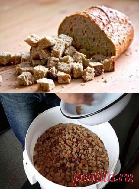 Подкормка растений из хлеба, как приготовить удобрение и область применения | Дача - впрок
