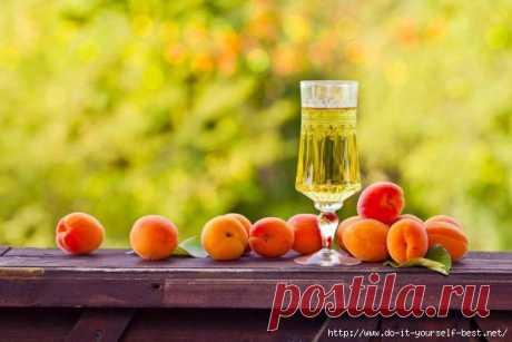 Наливка из абрикосов на водке