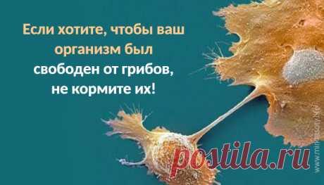 Если хотите, чтобы ваш организм был свободен от грибов, не кормите их О дрожжах, кандиде и противогрибковой еде – рассказывает врач