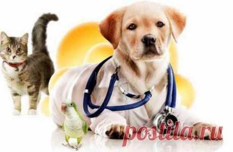 Ветеринарная клиника для домашних питомцев