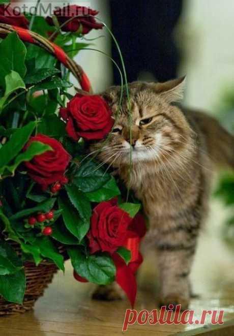 Котик и цветы - подарок для любимой