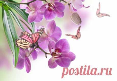 Обои на рабочий стол Цветы:Цветы, Орхидеи, Бабочки - скачать бесплатно.   Обои-на-стол.com