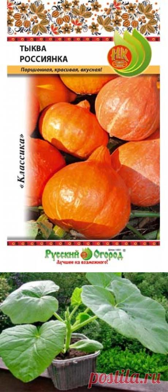 Выращивание тыквы в Сибири - посадка, уход, сбор урожая