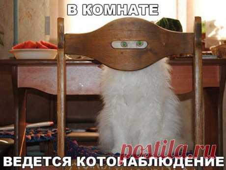 Фото Без названия. Альбом Кошки - 198 фото. Фотографии !Писатель Александр Романов.
