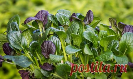 Витамин, который регулирует работу ЦНС. Самый важный витамин | Здоровье и Долголетие | Яндекс Дзен