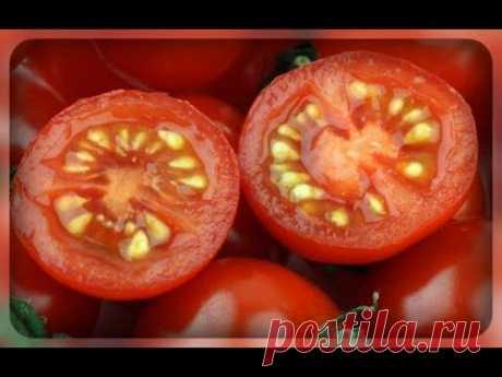 Основные правила заготовки семян томатов