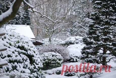 Что делать зимой на даче? | ЗАГОРОДНАЯ ЖИЗНЬ | Яндекс Дзен