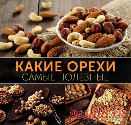Самые полезные из орехов Разнообразие орешков из разных стран, представленных на полках продуктовых магазинов, может кого угодно сбить с толку. Чтобы такой проблемы не возникало, перед их покупкой следует узнать: какие орехи ...