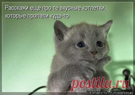 Лучшие котоматрицы недели / Питомцы