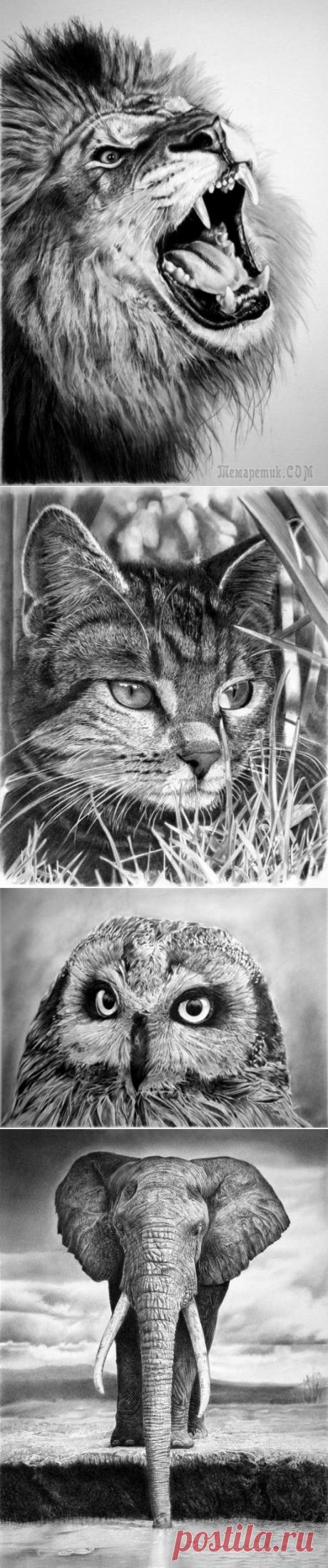 Франко Клун (Franco Clun) и его гиперреалистические рисунки карандашом.