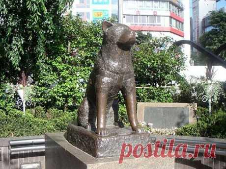 Собака родилась в 1923 году в городе Одата, Япония. Хозяином его был профессор университета Токио — доктор Уэно. Когда Хатико было полтора года, его хозяин умер. Пёс в течение всей своей жизни каждый день приходил на станцию Сибуя и искал своего хозяина, пока в 1935 году не умер. В честь верного своему хозяину пса поставили памятник, названный «Верный Хатико».