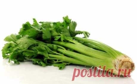 Рецепты блюд из черешков сельдерея
