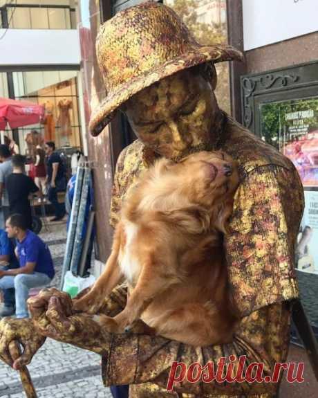 Прелестная собачка очаровательно помогает своему хозяину, уличному артисту, изображать живую статую (3 фото + 2 видео) . Тут забавно !!!