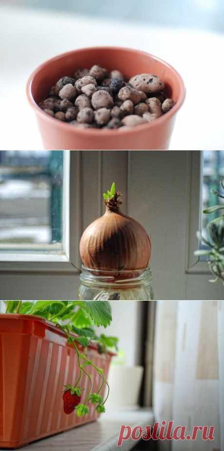Как организовать домашний огород и вырастить в нем травы и другую растительность | Лайфхакер