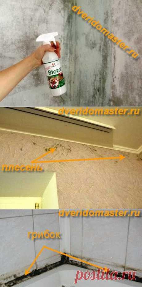 Грибок на стенах, как убрать навсегда? | Секреты мастера