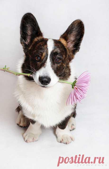 Самые умные породы собак. Топ-26