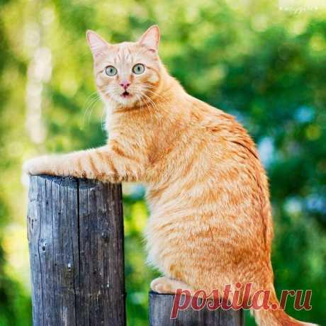 """Без кота и жизнь не та : """"Вы ктo такие? Я вac не звал"""""""