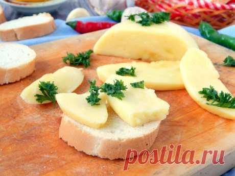 Твердый сыр из молока в домашних условиях рецепт с фото пошагово - 1000.menu