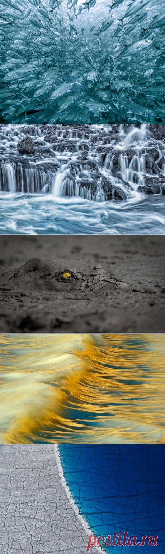 Лучший фотограф природы 2020 года