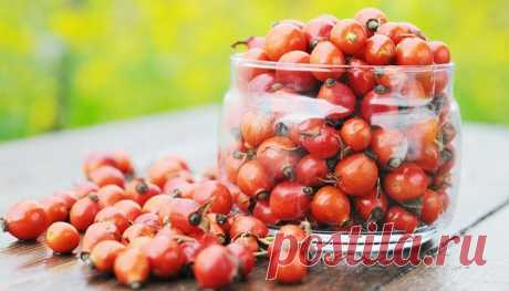 Dogrose – the emergency help for a liver! One-day course of cleaning and improvement.