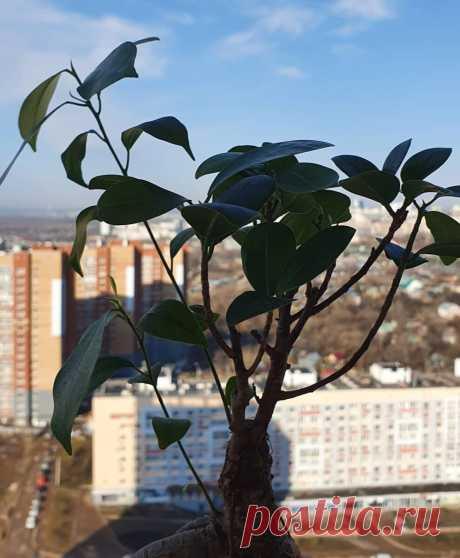 Как выращивают бонсай и почему я расстроился, купив себе новое дерево | Антон - цветочник | Яндекс Дзен