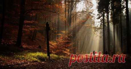 Национальный парк Чешская Швейцария. Автор фото — Наталья Прохорова: nat-geo.ru/photo/user/294961/