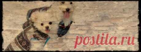 """6. ДЛЯ ТЕХ, КТО ЛЮБИТ ВЯЗАТЬ - вязание для собак и кошек , свитера, кофты, попоны для собак, комбинезоны, шапочки, обувь для собак, скачать бесплатно книгу Корин Ниснер """"Вяжем для четвероногих модников"""", needleworkdogss Jimdo-Page!"""