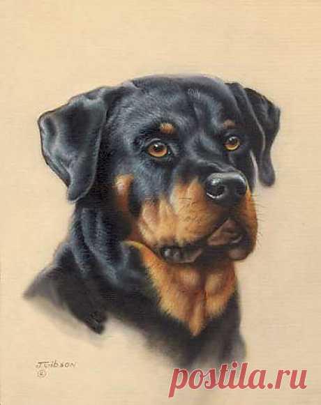 Красивый рисунок ротвеллера.....))))) Если я не ошибаюсь с породой.....))))))))
