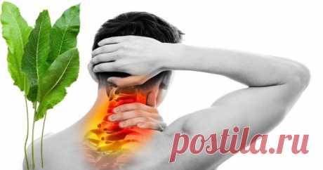 Листья хрена против излишков солевых отложений в организме - HeadInsider