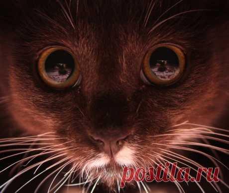 Кот, сфотографированный под диваном