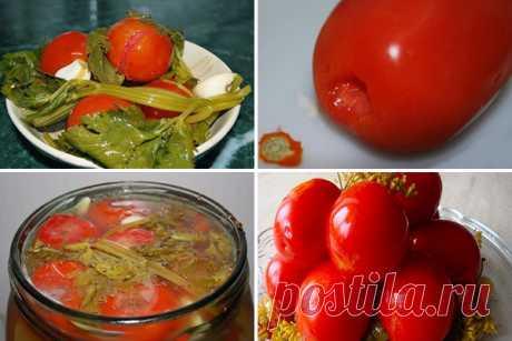 Квашенные помидоры по-быстрому — СОВЕТНИК