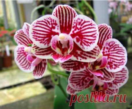 Все про орхидеи.