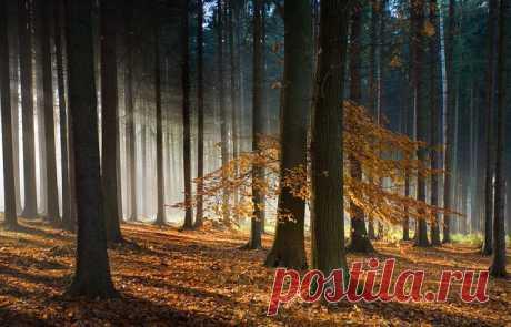 getImage (изображение «JPEG», 640×410 пикселов)