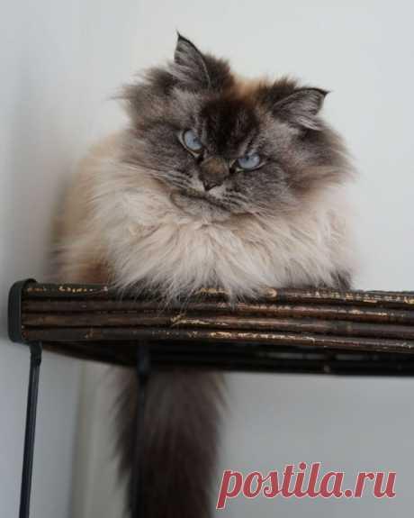 Злые коты, не скрывающие эмоции