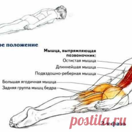 Простое упражнение для профилактики болезней спины